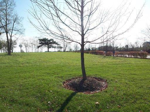 Land for Sale at Lot 2 Central Road Hoffman Estates, Illinois 60195 United States